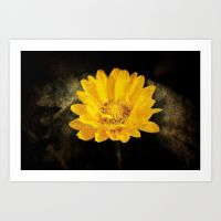 beautiful sunflower with dark brown background prints