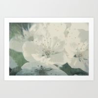 cherry-blossom-cca-prints