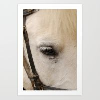 face-of-a-horse-prints