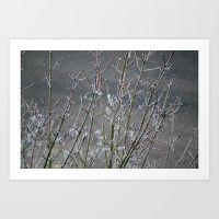 frost-0c7-prints