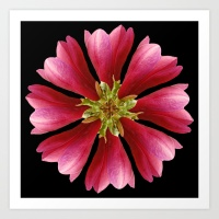 magnolie-s4w-prints