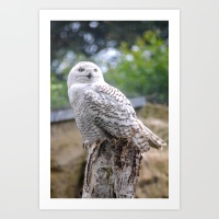 snow owl prints