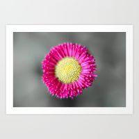 blossom from a daisy